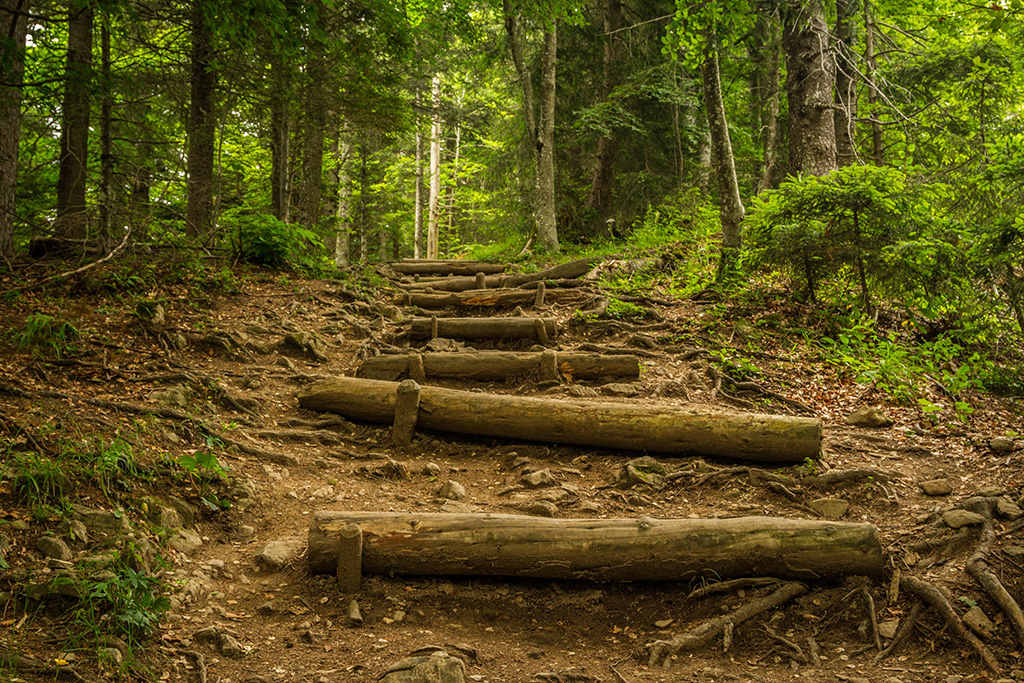 log steps on path in wooded forest
